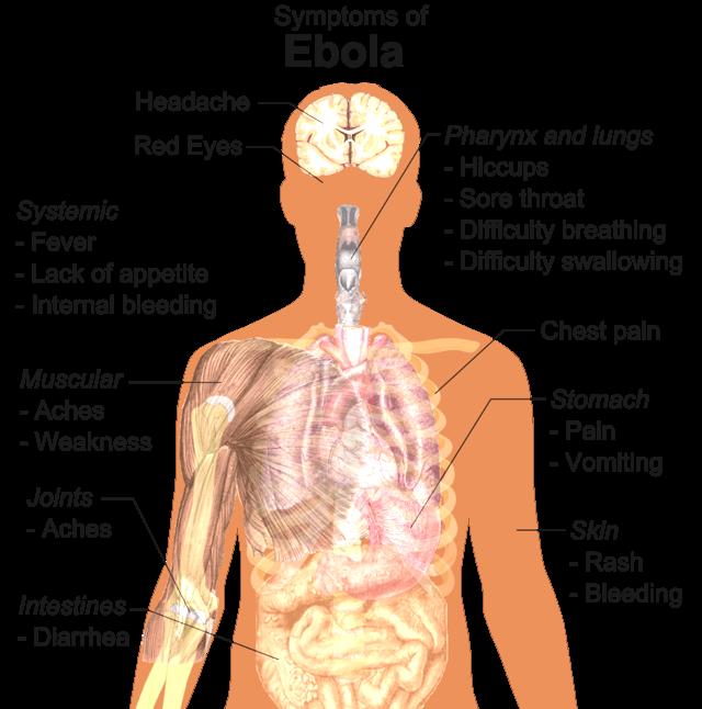 how to avoid ebola outbreak