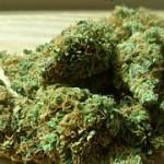 Marijuana (photo by Pixabay)